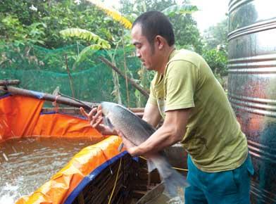 Làng Vũ Đại đắt khách món cá kho Chí Phèo (1)