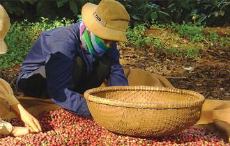 Sự bành trướng nhanh của Thái Hòa đã không đi kèm với sự tăng trưởng bền vững về tài chính.