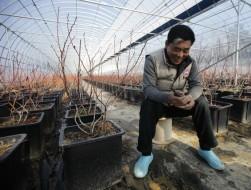 Hàn Quốc: Bỏ Chaebol về với nông trại