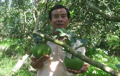 Triệu phú vườn bưởi hồ lô 'Tài & Lộc'