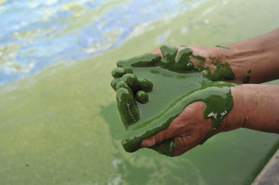 Hình ảnh đáng sợ về những nguồn nước 'chết' ở Trung Quốc (11)