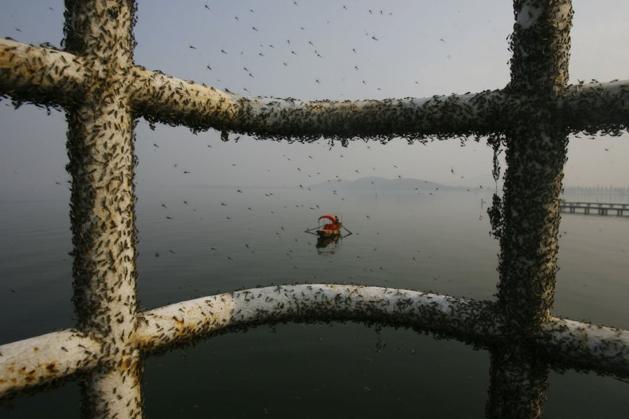 Hình ảnh đáng sợ về những nguồn nước 'chết' ở Trung Quốc (20)