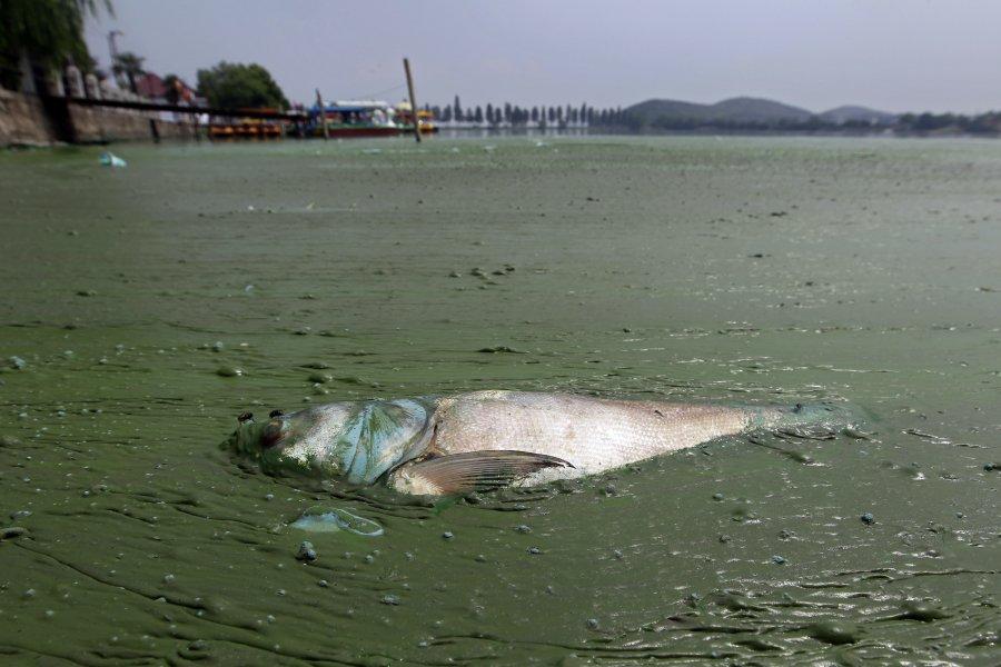 Hình ảnh đáng sợ về những nguồn nước 'chết' ở Trung Quốc (6)