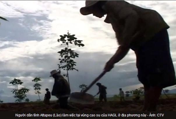 Người dân tỉnh Attapeu (Lào) làm việc tại vùng cao su của HAGL ở địa phương này - Ảnh: CTV