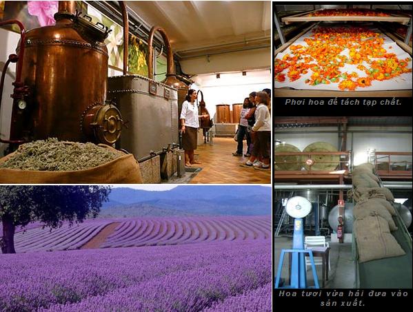 Hương gỗ, vỏ quế, tinh dầu hoa... đã biến hóa vào chai nước hoa như thế nào? (1)