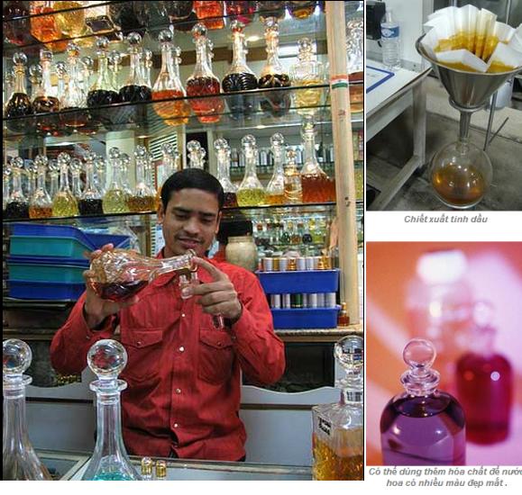 Hương gỗ, vỏ quế, tinh dầu hoa... đã biến hóa vào chai nước hoa như thế nào? (3)