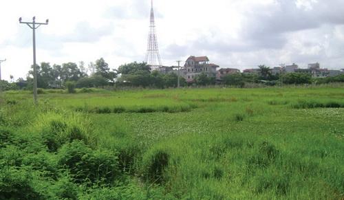 Những dự án BĐS chỉ để cỏ mọc (3)