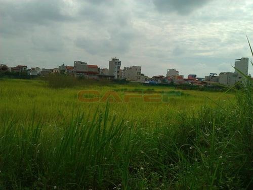 Những dự án BĐS chỉ để cỏ mọc (6)
