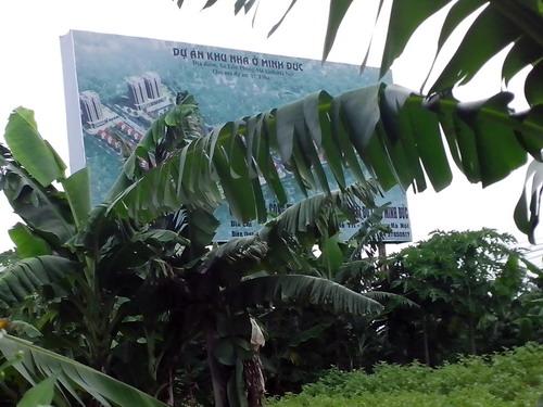 Xót xa với cảnh hoang tàn một số dự án đô thị mới Mê Linh (1)