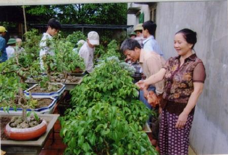 Đổ xô đi học nghề trồng cây cảnh.