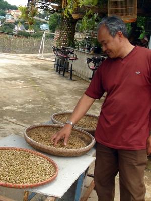 Cà phê chồn: Huyền thoại và hiện thực (1)