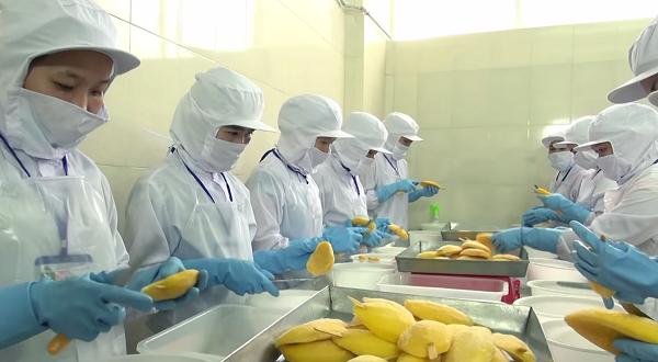 Khoảng 700 công nhân đang làm việc tại nhà máy với công suất gần như tối đa.