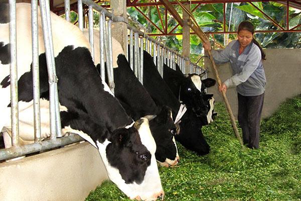 Việc lệ thuộc vào việc nhập khẩu giống, thức ăn khiến giá sản phẩm chăn nuôi của VN rất cao. Ảnh: KỲ ANH