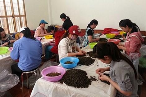 Hoạt động của Công ty TNHH Hà Linh vẫn diễn ra bình thường. Ảnh: CD