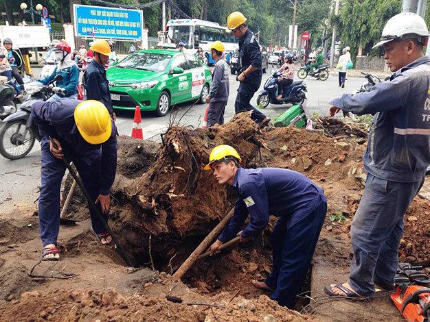 Các nhân viên công ty công viên cây xanh xử lý sự cố - Ảnh: Đại Việt