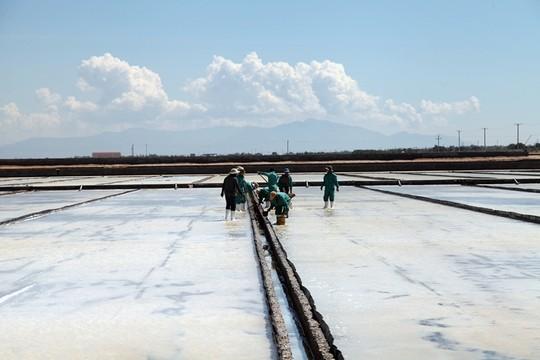Đồng muối Quán Thẻ gây nhiễm mặn hàng trăm ha đất sản xuất của dân khiến đời sống của họ ngày càng khốn khó