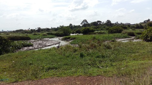 Một diện tích đất rất lớn bên trong dự án vẫn chưa được đầu tư xây dựng gì gần 15 năm nay.