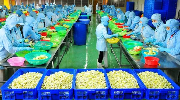 Các công nhân tham gia chủ yếu vào quá trình sơ chế trái cây.