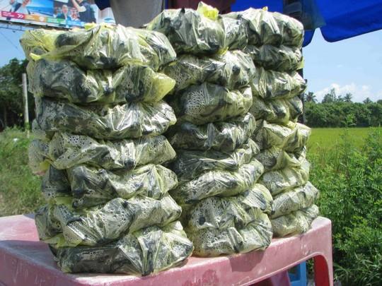 Ấu nấu chín, vô bịch để mang đi bán lẻ với giá khoảng 20.000 đồng/kg