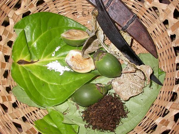 Ngoài ra, lá trầu không ăn kèm với hạt cau và thuốc lào cũng có thể gây ra ung thư.