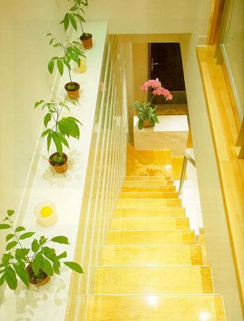 Là điểm nhấn trong ngôi nhà nên cầu thang thường được nhiều gia đình đầu tư rất tỉ mỉ. Nhiều gia đình lựa chọn vách kính để giúp không gian thoáng và rộng hơn. Ngoài ra có thể tạo không gian xanh ở khu vực này bằng cách thiết kế những góc nhỏ tiện cho việc bài trí tiểu cảnh làm duyên cho ngôi nhà.