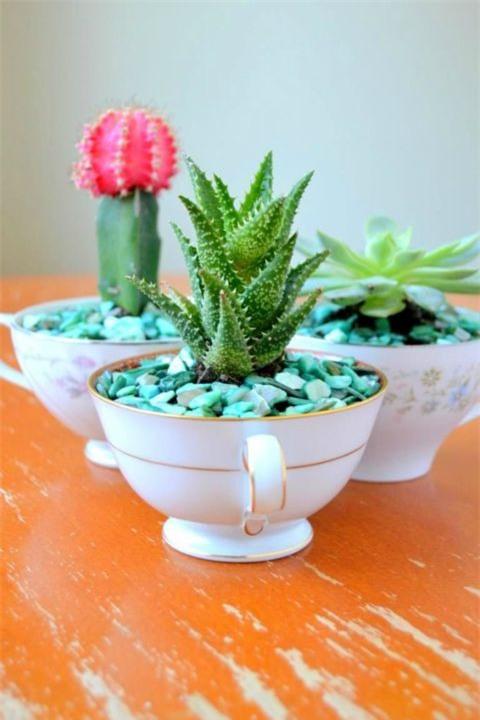 Những chén trà xương rồng thế này sẽ vô cùng đẹp mắt nếu được bày trên bàn tiếp khách nhà bạn.