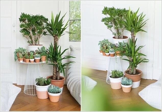 Bạn cũng có thể tận dụng một góc nhỏ trong phòng khách để đặt bộ sưu tập cây xanh nổi bật.