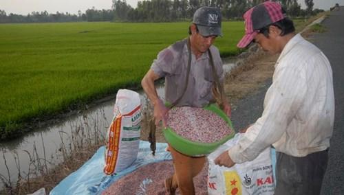 Nông dân là người gánh chịu hậu quả của nạn phân bón kém chất lượng. Ảnh: Vũ Hoàng.