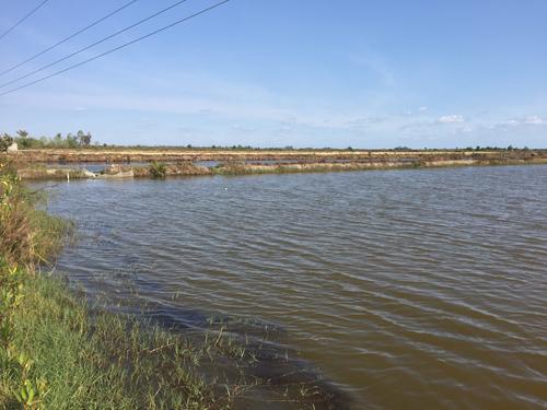 Mô hình tôm - lúa đang giúp người dân sống khỏe trong vùng hạn, mặn