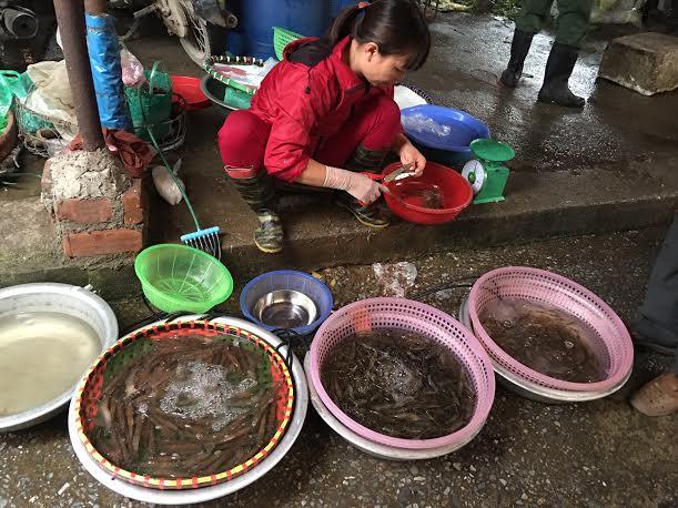 Tất cả các loại tôm tại chợ ở Hà Nội đều tăng giá mạnh