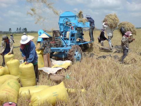 Sức cạnh tranh của nông sản Việt Nam rất thấp.