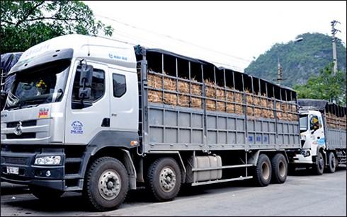 Trung bình mỗi ngày có 220 - 230 xe dưa hấu và thanh long được thông quan qua cửa khẩu Tân Thanh. (Ảnh: Internet)