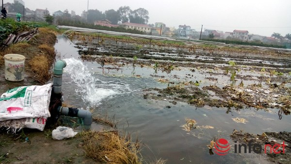 Đa số người dân trồng rau an toàn ở xã Vân Nội, huyện Đông Anh, Hà Nội dùng nước giếng khoan để tưới rau.