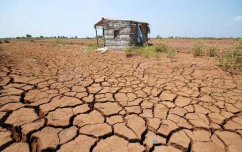 Hạn hán, nhiễm mặn ảnh hưởng nghiêm trọng đến việc sản xuất nông nghiệp của người dân. Ảnh: Zing