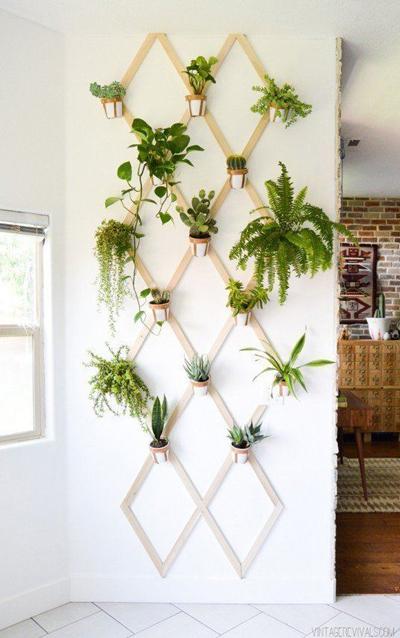 Giàn treo hình quả trám làm thành vườn thẳng đứng cho khoảng tường trống.