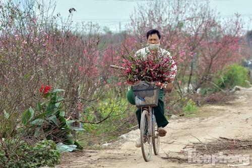 Nhiều người mang đào về bán trong ngày rằm với giá rẻ tại chợ Quảng An, Nhật Tân,... với giá vài chục nghìn một cành.