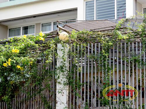 Du khách đi qua đây vô cùng ấn tượng với những hàng rào có hoa leo