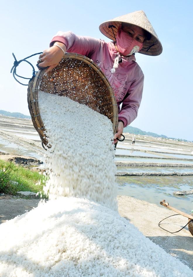 Muối Sa Huỳnh thường xuyên bị thương lái ép giá, cuộc sống diêm dân địa phương quanh năm gặp nhiều khó khăn. Ảnh: Minh Hoàng.