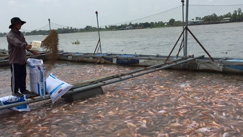 """Tình trạng lạm dụng kháng sinh, sử dụng chất cấm trong nuôi trồng thủy sản khá phổ biến khiến nhiều doanh nghiệp lo ngại về """"cái chết được báo trước"""" của hàng thủy sản Việt Nam khi xuất khẩu. Ảnh: Nguyễn Phương."""