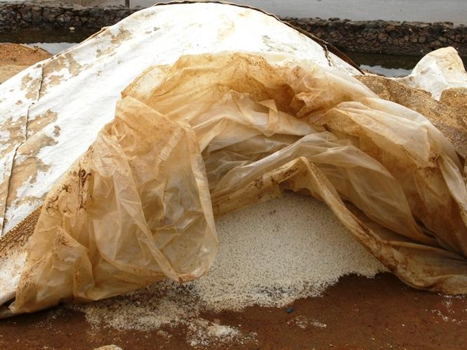 Muối tồn trên đồng do giá rớt thê thảm