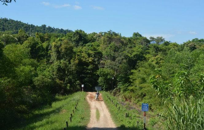 Đường vào tiểu khu 310, một trong hai khu rừng được giao để làm dự án chăn nuôi bò thịt, bò sữa - Ảnh: DUY NGUYỄN