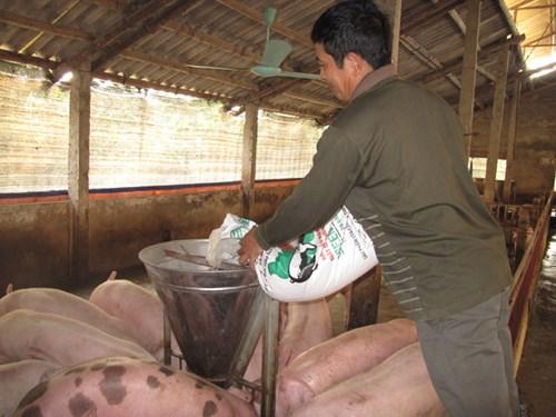 Tình trạng lạm dụng kháng sinh trong chăn nuôi, thủy sản đang ở mức báo động. Ảnh: Nam Khánh.
