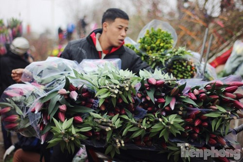 Khi đó, nhiều hộ nông dân đã chấp nhận thuê xe tải đưa hoa ly lên Sa Pa để ủ lạnh, bảo quản cho đến thời điểm cận Tết sẽ chở về Hà Nội bán.