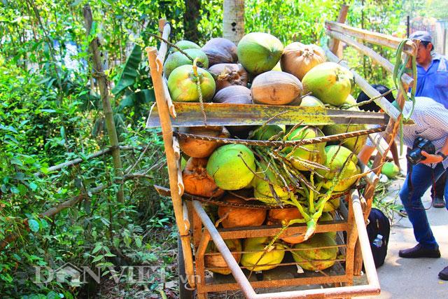 Giá dừa tăng cao do nhu cầu nước uống của người dân vào mùa nắng tăng.