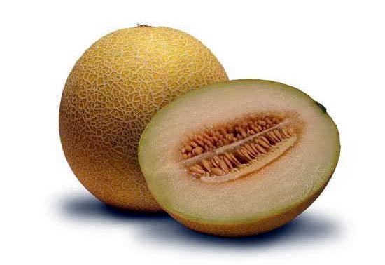 ưa lưới vàng Việt Nam quả tròn, nhỏ chỉ tầm 1 kg/quả