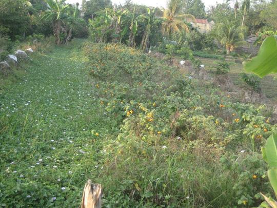 Đã hết Tết nhưng trái dư vẫn còn đầy đồng ở Hậu Giang và TP Cần Thơ