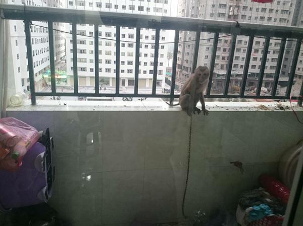 Khỉ leo trèo khắp nơi khiến người dân bức xúc.