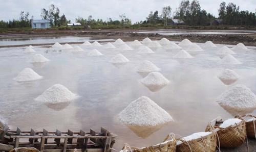 Thời tiết nắng nóng, năng suất muối ở xã Dân Thành, Duyên Hải (Trà Vinh đạt khá cao từ 50 – 60 tấn/ha.