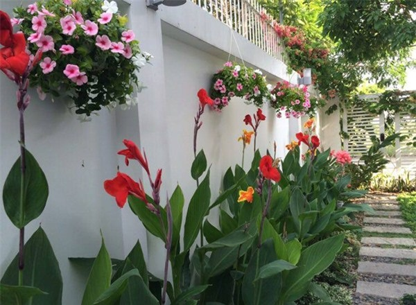 Hai vợ chồng anh tận dụng mọi khoảng trống như sân thượng , lối đi, tường rào xung quanh,… để trồng các loại cây, hoa đem đến không gian xanh, không khí trong lành cho ngôi nhà.