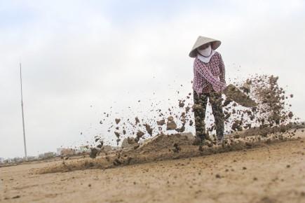 Vì thế, mấy ngày nắng đã trở nên quý giá với diêm dân. Người dân ở xã Bạch Long (Giao Thủy, Nam Định) - nơi được coi là vựa muối lớn nhất miền Bắc với tổng diện tích ruộng muối là 230ha, ngay từ tảng sáng, mọi người đã hò nhau ra đồng, bắt đầu với những công việc quen thuộc: Xe cát, trang, phơi cát, lọc chạt… Sau đó thu cát lại, để chắt lọc lấy nước mặn, đổ nước đã được lọc tỉ mỉ, cẩn thận lên những ô nề. Dưới cái nắng chói chang đầu hạ, những hạt muối dần kết tinh. Khi bóng ngả dần về chiều là lúc diêm dân thu hoạch muối.